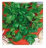 1800 C.ca Semillas de apio - En su embalaje original - Made in Italy - Aromas -...
