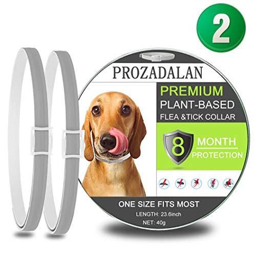 PROZADALAN Collare Antipulci Cane Impermeabile, Design Impermeabile e 8 Mesi Efficacia Collare Antiparassitario Antizecche Regolabile Naturale per Piccoli Animali Domestici di Taglia Media(25inch)