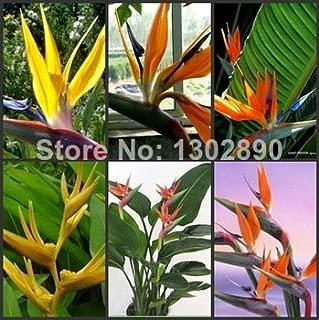 Brand New! 50 pcs 10 Kinds Indoor Potted Plant Flowers Strelitzia Reginae Seed Paradiesvogel Seed Bird Of Paradise Seed DIY