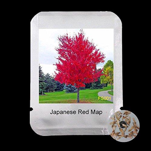 100% vrais japonais Red Maple Bonsaï Graines bon marché, l'emballage professionnel, 50 graines / Pack, Très belles graines d'arbres, # FS001