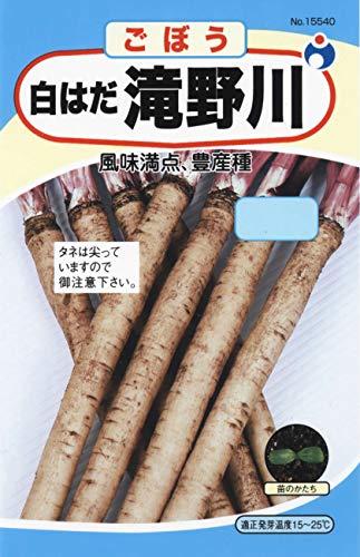 ウタネ(Utane) 白はだ滝野川 ごぼう種子 No.15540
