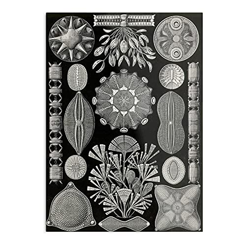 Diatomea Diatom Microorganisms Ernst Haeckel The Best and Style Home Decor Wall Art Print Poster Customize