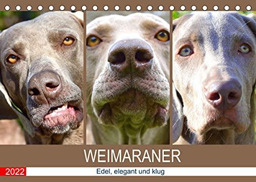 Weimaraner. Edel, elegant und klug (Tischkalender 2022 DIN A5 quer): Der Weimaraner ist ein wahrlich vornehmer und athletischer Jagdhund (Monatskalender, 14 Seiten )