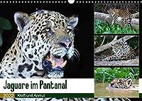 Jaguare im Pantanal (Wandkalender 2022 DIN A3 quer): Jaguare in ihrem natuerlichen Lebensraum (Monatskalender, 14 Seiten )