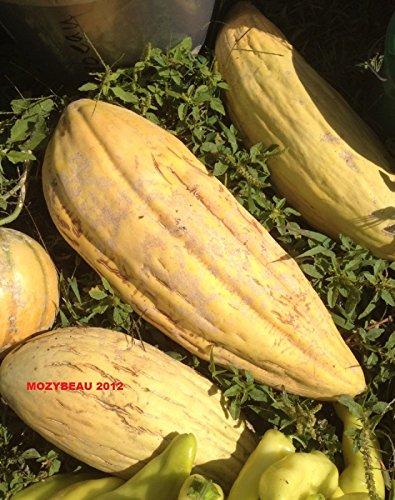 25-30 Banana Melon/Cantaloupe Seeds. Premium USA Seeds. Erbstück.