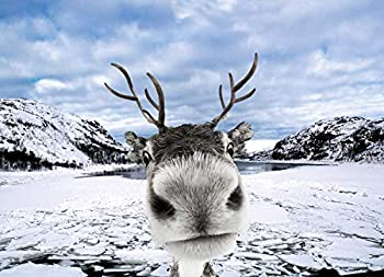 Reindeer Funny Christmas Cards Boxed Set of 12 Holiday Cards and 12 Envelopes Made in USA.