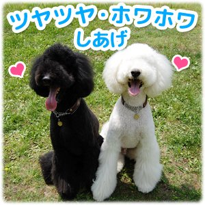 ハッピーピーター『オーガニックホホバとティーツリーの犬用シャンプー』