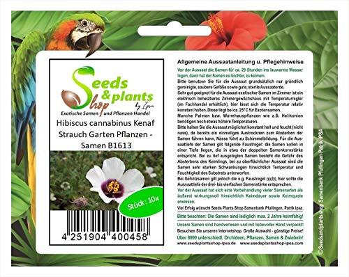 Stk - 10x Hibiscus cannabinus Kenaf Strauch Garten Pflanzen - Samen B1613 - Seeds Plants Shop Samenbank Pfullingen Patrik Ipsa
