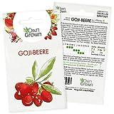 Goji Beeren Samen: Premium Goji Samen für 4 Goji Pflanzen zur Aussaat – Chinesische Wolfsbeere Saatgut zum Pflanzen – Gojibeeren Samen, Gemeiner Bocksdorn Samen – Goji Beeren Pflanzen Samen OwnGrown