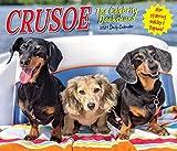 Crusoe the Celebrity Dachshund 2021 Box Calendar (Dog Breed Calendar)