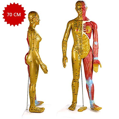 LUCKFY 70cm(27\u0026quot;) Human Acupuncture Model Female Anatomy Educational Teaching Display Anatomy Copper Bronze Color Model with Holder