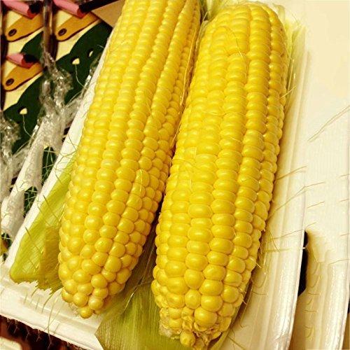 Auntwhale Graines de maïs Super Sweet 50G installées
