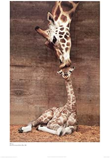 Best giraffe kissing baby poster Reviews