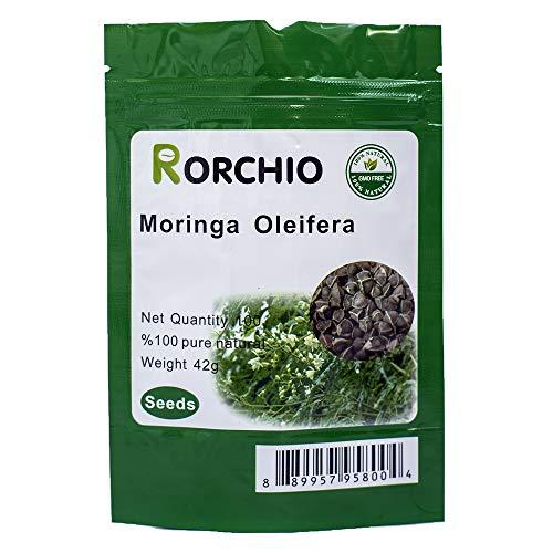 100 Moringa Also Known as drumstick Tree Moringa Seeds ~ Chris's Garden