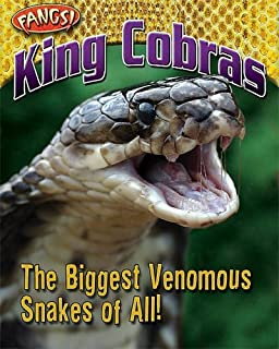 King Cobras: The Biggest Venomous Snakes of All! (Fangs)