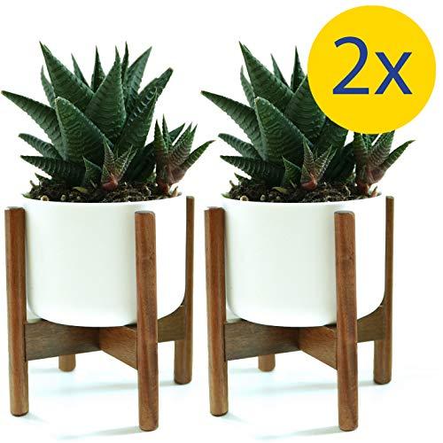 Fox amp Fern Modern Mini Plant Stands  Acacia  35quot White Ceramic Planter Pots  Set of 2