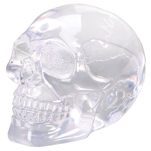 SUMMIT COLLECTION 3 inch Small Clear Translucent Skull Head Collectible Figurine