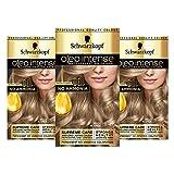 Schwarzkopf Oleo Intense Blonde Haarfarbe, 3er Pack Permanente Ölfarbe, ohne Ammoniak, deckt Grau ab, Beige Blond 8-05
