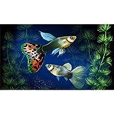 5D Pintura Diamante Painting Kit DIY Taladro CompletoPeces de acuario Hada Adultos Niño Punto Cruz Cuadro Grande Puzzle Rhinestone Bordado Art Home Pared Decor Manualidades 60x120cm