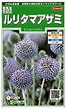 サカタのタネ 実咲花6890 ルリタマアザミ 00906890-01