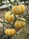 AGROBITS des graines: Couronne Petit mini-5pcs bonsaï ppkin -Imprimé spécifiquement pour bonsaï Vegeta en Bonne santé