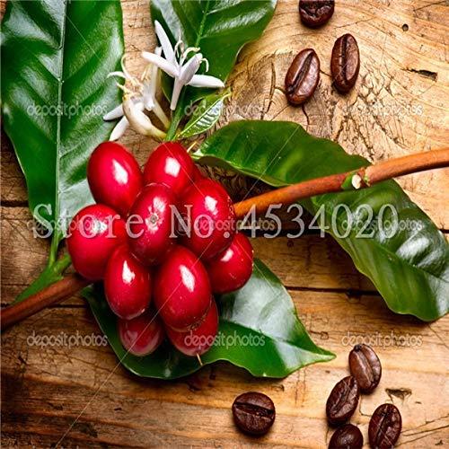 HONIC 10 PC/Beutel Kaffeebohne Flores Bio-Obst plantas Gemüse Refreshing Bonsai-Anlage für Haus und Garten Bonsais planta: 12