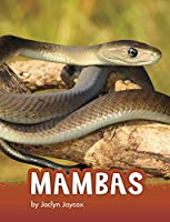 Mambas (Animals)