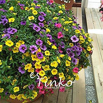 PLAT会社-SEEDS 50個Calibrchoa「ミリオンベル」種子ミックスカラーCalibrchoa花の種子ホームガーデン盆栽花工場DIYの