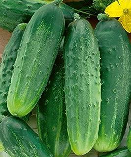 Sin espinas frutos de las semillas de pepino de mini 20Seeds