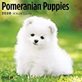 2020 Pomeranian Puppies Wall C...
