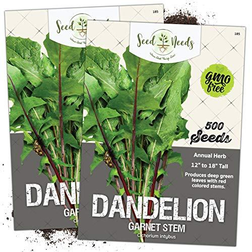 Seed Needs, Garnet Stem Dandelion (Cichorium intybus) Twin Pack of 500 Seeds Each Non-GMO