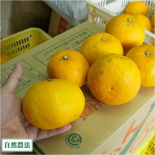 【A・B品混合】 甘夏 10kg 自然農法 (広島県 道谷農園) 産地直送 ふるさと21