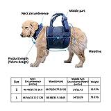 Imbracatura di Supporto per Il Sollevamento del Cane, Cintura di Azione per Imbracatura pe...