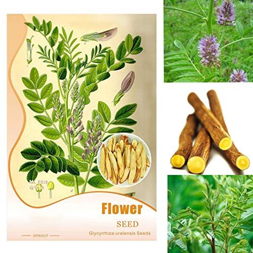 Tomasa Gartensamen- Süßholzpflanze,Glycyrrhiza Lakritzsamen glabra- Heilpflanze Pflanzensamen Glycyrrhiza Samen winterhart mehrjährig exotische Süßholz Samen