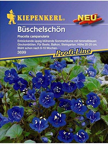 Phacelia campanularia Büschelschön