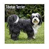 Tibetan Terrier Calendar 2021 | Square Dog Breed Wall Calendar | 16 Month | with Organisational Stickers