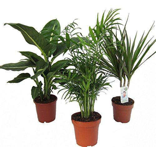 Amazon.de Pflanzenservice -  Dominik Blumen und