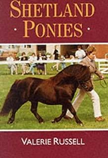 Shetland Ponies (Horses & Ponies)