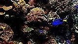 dxycfa Pintura digital Pintura al óleo de peces de acuario por números Kits de bricolaje Lienzo de lino Decoración de la pared del hogar para adultos Principiante-40x50cm Sin marco