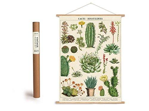 Cavallini Vintage Poster Set mit Holzleisten (Rahmen) und Schnur zum Aufhängen, Motiv Kakteen, Kaktus