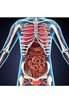Human Body Organs Skeletal System 3D Illustration Educational Chart Laminated Dry Erase Sign Poster 24x36