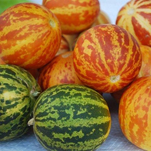 Queen Anne Pocket Melon oder Plum Granny 25 Samen Probieren Sie es aus Sie Schöne sind