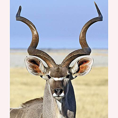 ikea antilop ålder
