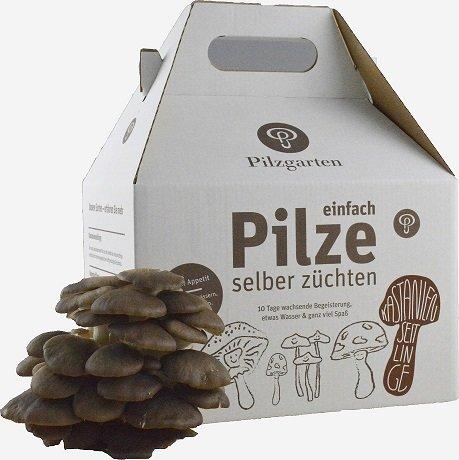 Pilzzucht-Set Kastanienseitling
