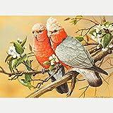 DIY 5D Diamante Pintura Completo Kits Pinturas por Numeros, Bordado Punto de Cruz Manualidades Pájaro animal flor blanca Art para Decoración de Pared del Hogar Regalos para adultos y niños 30 * 40cm