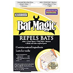 Best phenol for bats