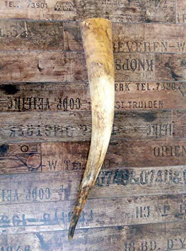 Naturhorn Watussi Longhorn, ca. 60-65 cm, 1,2-1,4 Liter Volumen,für Met-Wikinger-LARP- Mittelalter-Drinking Horn-Methorn, Germanenhorn, ein echtes Wikinger Geschenk