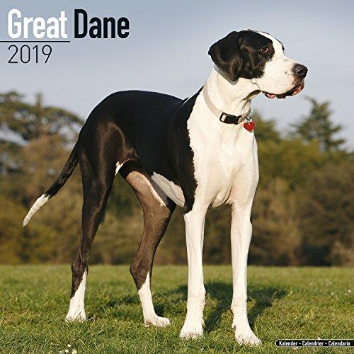 Great Dane Calendar 2019