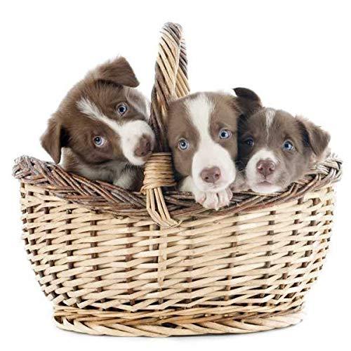 Specxs Microvezeldoek - Animal - honden in de mand - geschikt voor alle optische oppervlakken (18x18cm) - wasbaar
