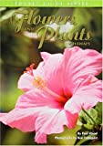 Flowers and Plants Of Hawaii: Pocket Guide - Paul Wood